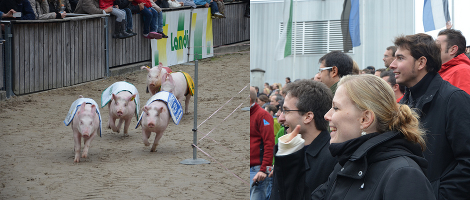 LUC Switzerland: Discovering the Swiss Far East by cheering pigs